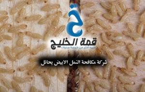 شركة مكافحة النمل الابيض بحائل 0533942974