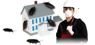 افضل شركة مكافحة الحشرات