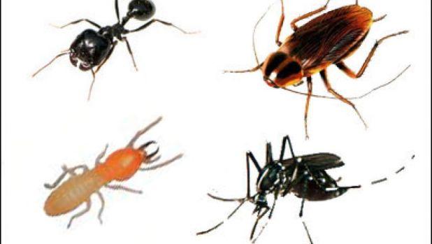 أسرع طرق للتخلص من الحشرات
