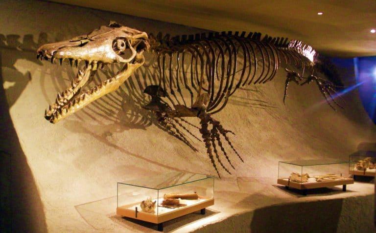"""اكتشاف """"موزازور"""" جديد من العصر الطباشيري"""