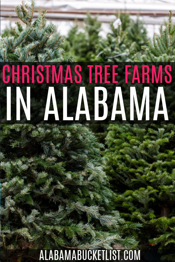 'Tis the season for choosing the perfect Christmas tree at one of these festive Christmas tree farms in Alabama. Make it a fun family affair! #christmas #christmastree #treefarm #holiday #alabama