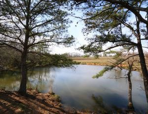 Alabama Pond & Lake Resources