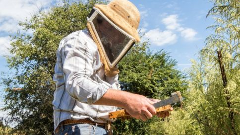 """Justin Hill maintains one of the largest bee hive systems in the state. """"I can't even tell you how many times I've been stung,"""" he says. (Mark Sandlin/Alabama NewsCenter)"""