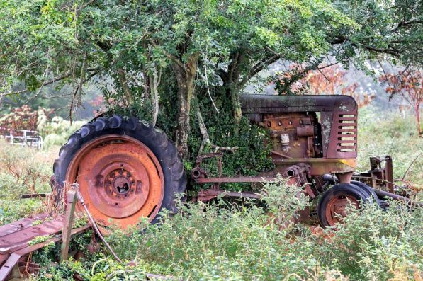 A tree growing around and through a tractor once owned by Justin Hill's great-grandfather, Evan Hill, served as inspiration for Eastaboga Bee Company's logo. (Mark Sandlin/Alabama NewsCenter)