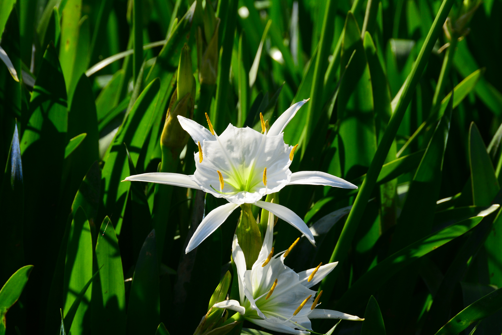 Cahaba Lily Festival In West Blocton Celebrates Featured Flower