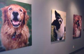 Inside Dog Days of Birmingham (Keisa Sharpe/Alabama NewsCenter)