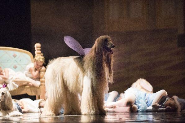The Birmingham Ballet will perform the Mutt-Cracker at the BJCC. (Alabama NewsCenter/file)