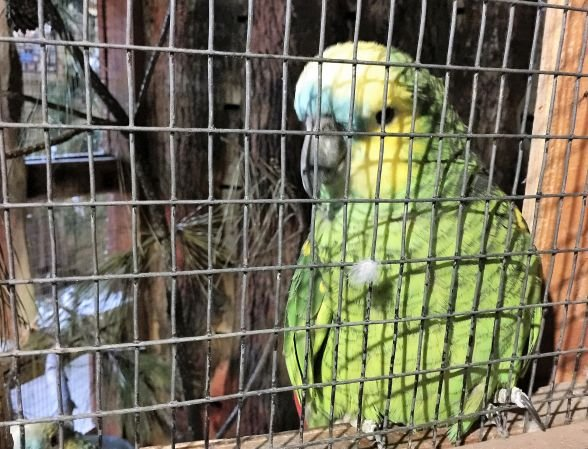 Exotic birds await. (Donna Cope / Alabama NewsCenter)
