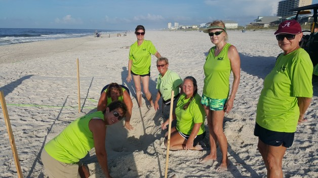 Share the Beach volunteers try to locate sea turtle eggs within a nest. (Share the Beach)