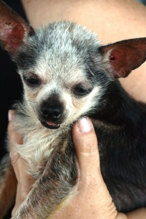 About 700 neglected animals a year find loving homes through Two by Two Rescue, a no-kill nonprofit. (Karim Shamsi-Basha/Alabama NewsCenter)