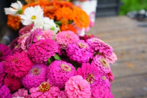 Organically grown flowers from Belle Meadow Farm. (Mark Sandlin/Alabama NewsCenter)