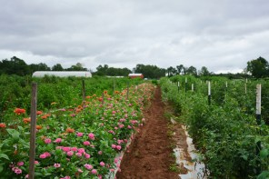 The Kestersons grew up in town but quickly took to organic farming. (Mark Sandlin/Alabama NewsCenter)