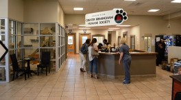 When a hurricane displaces animals, the Greater Birmingham Humane Society stands ready to help. (Karim Shamsi-Basha/Alabama NewsCenter)