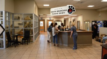 When a hurricane displaces animals, the Greater Birmingham Humane Society stands ready to help. (Karim Shamsi-Basha/Alabama NewsCenter)