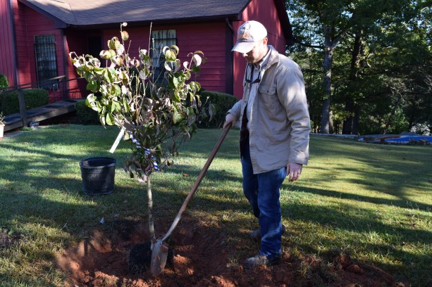 To help keep tree roots healthy, score the earth with downward strokes of the shovel. (Donna Cope/Alabama NewsCenter)