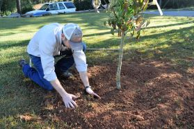 Create a raised berm at the outermost edge, which will hold water when it rains. (Donna Cope/Alabama NewsCenter)