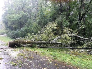 Fallen trees like this one in the Birmingham area caused outages throughout Alabama as Hurricane Nate passed through. (Donna Cope / Alabama NewsCenter)