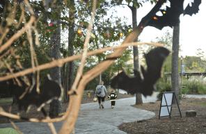 2017 Boo at the Zoo (Meg McKinney)