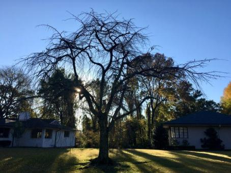 Alabama's autumnal splendor can still be enjoyed. (Bob Blalock / Alabama NewsCenter)