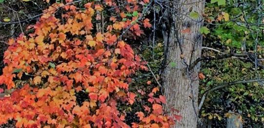 Alabama's autumnal splendor is a special kind of beautiful. (Donna Cope / Alabama NewsCenter)