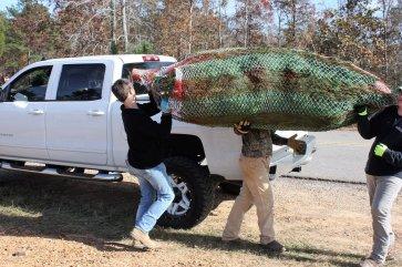 Murphy's Christmas Tree Farm employees load a Christmas tree into a customer's pickup. (Robert DeWitt / Alabama NewsCenter)