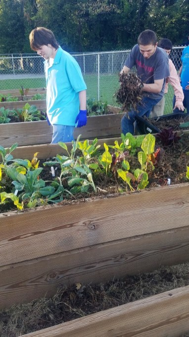 Gadsden students grow vegetables for their Beautiful Rainbow Café. The restaurant and academic program has succeeded in teaching special needs students concepts they had difficulty grasping in a normal classroom setting. (Contributed)