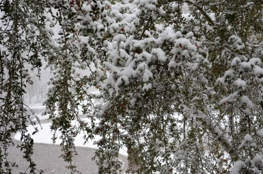 McCalla has also been hit with snow in seasons past. (Michaela Tomberlin)