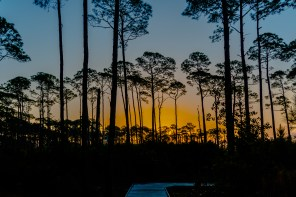 Audubon Bird Sanctuary, Dauphin Island. (Jeremiah A. Gourd, Getty Images)