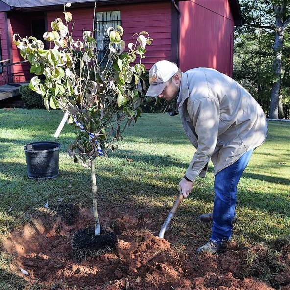 In addition to pruning, Alabama Power advocates proper tree planting. (file)
