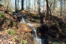 Louise Kreher Forest Ecology Preserve. (Brittany Faush/Alabama NewsCenter)
