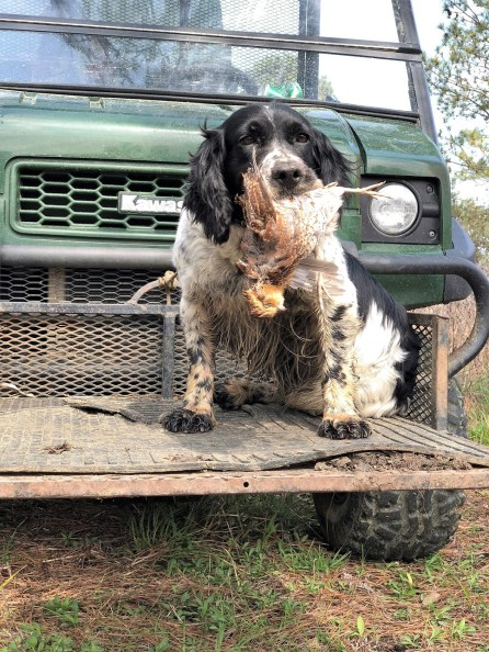Alabama's Black Belt is a paradise for bird hunters. (contributed)