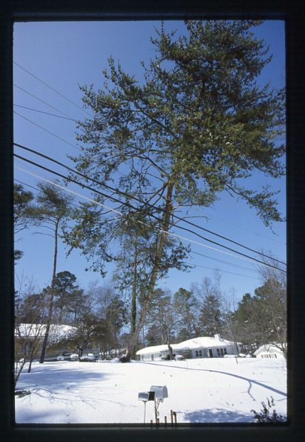 The Blizzard of '93 left snow-covered grounds in every part of Alabama. (file)