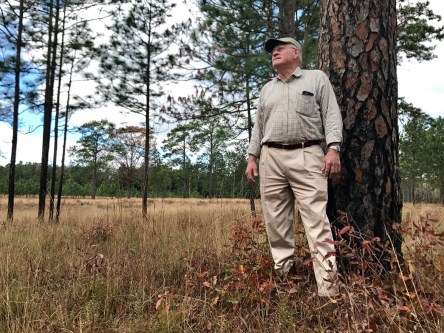 Charley Tarver's Longleaf Plantation is dedicated to restoration and management of longleaf pines, and is now home to a cluster of red-cockaded woodpeckers. (Mark Davis/U.S. Fish and Wildlife Service)