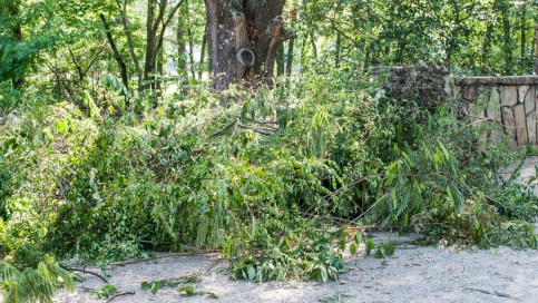 A pile of invasive plants awaits removal during last week's cleanup in East Lake Park. (Charlestan Helton/Alabama NewsCenter)