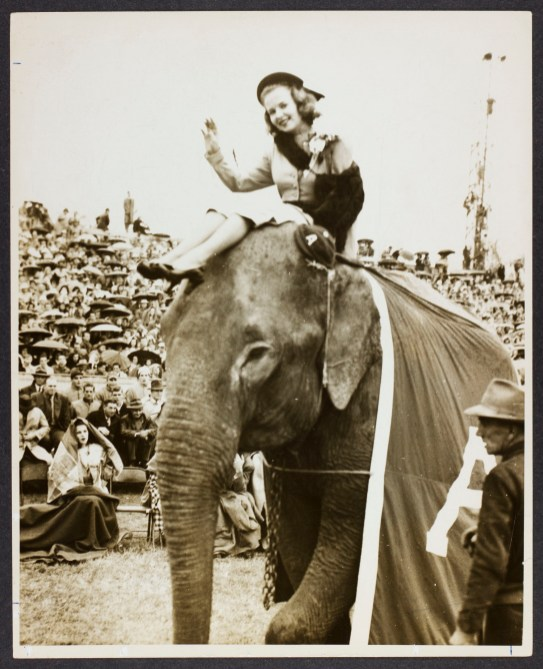 Homecoming Queen, Sue Donegan, is riding Alamite the elephant on the sideline during a football game in November of 1947. (The University of Alabama Libraries Special Collections)