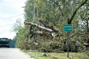 Dothan took a beating in the storm with trees uprooted. (Wynter Byrd)