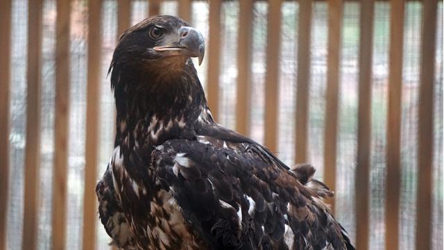 Alabama Wildlife Center debuts American bald eagle