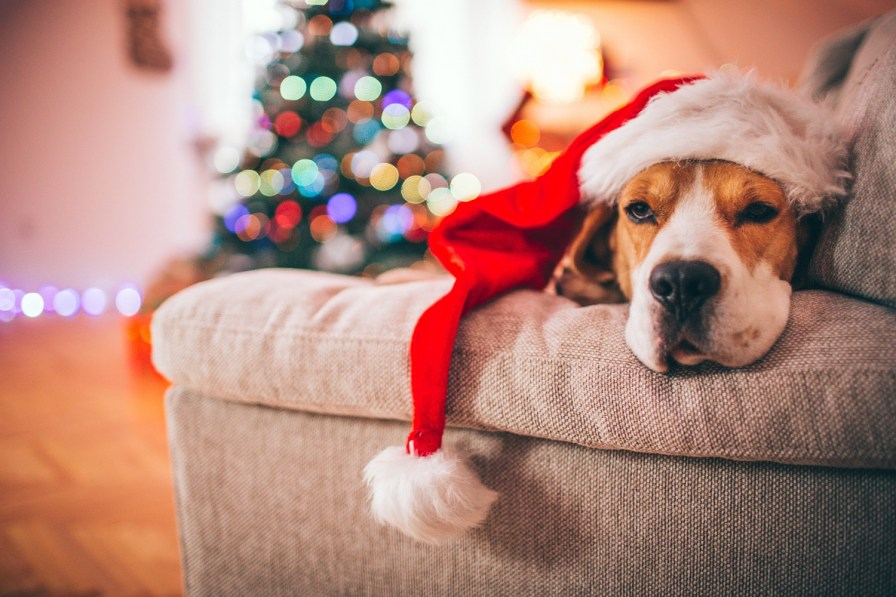 It's important to watch for pet allergies that can be activated by evergreens or dust on decorations removed from storage. (Getty Images)