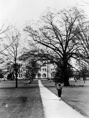 """A student walks toward the """"Old Main"""" and the Sherman Oak (to the right of the building) on the East Lake campus of Howard College (now Samford University) in the 1950s. The college relocated to the Birmingham suburb of East Lake in 1887 and then to the Shades Valley community near Birmingham in 1957. (From Encyclopedia of Alabama, courtesy of Samford University Special Collections)"""