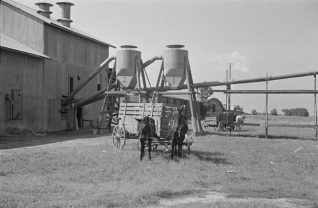 Cotton gin and wagons near Moundville, 1936. (Photograph by Walker Evans, Library of Congress Prints and Photographs Division)
