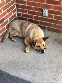 Evidence suggests Pup-Pup had a difficult life before showing up as a stray at Alabama Power Plant Greene County but her life ever since has bee much more pleasant. (contributed)