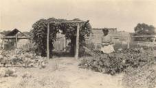 African-American woman in a garden in Madison County. The women are probably members of a local homemakers' club, c. 1915-17. (Alabama Department of Archives and History)