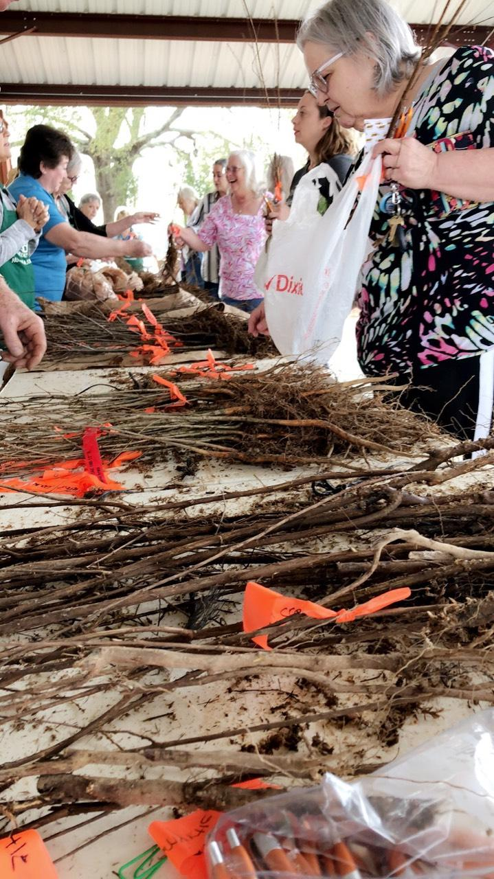 Prattville residents came out in droves to select seedlings for their homes. (Ethan James/Alabama Power)