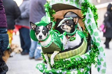 Enjoy a dog parade, contests and more. (Birmingham Hammerfest)
