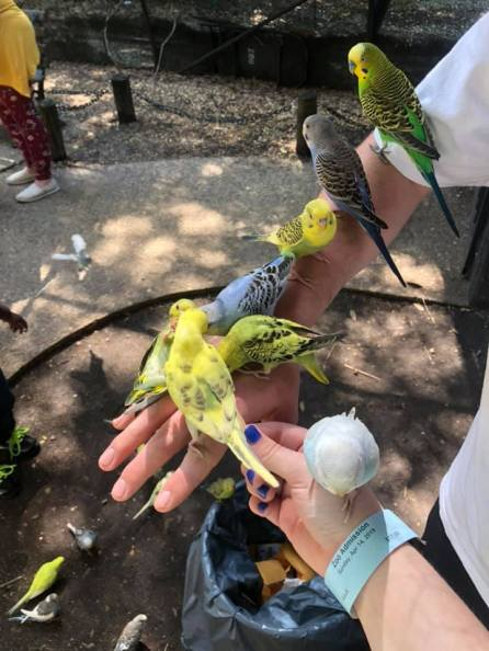 The Montgomery Zoo's Earth Day Safari is designed with children in mind. (Contributed)