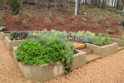 Herbs attract bees during the 'bolting,' or flowering phase. (Donna Cope/Alabama NewsCenter)