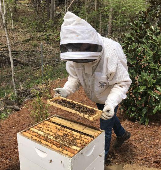 Hickman checks his bees. (Donna Cope/Alabama NewsCenter)