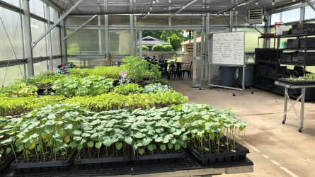 The greenhouse at Woodlawn High School in Birmingham, which is part of the city's Jones Valley Teaching Farm program. (Dennis Washington / Alabama NewsCenter)