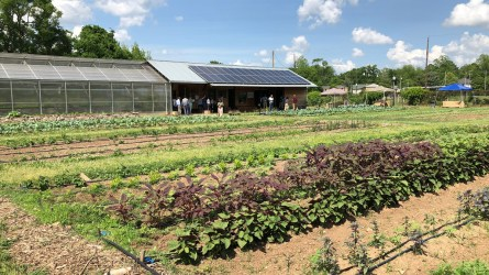 The gardens at Woodlawn High School in Birmingham, which is part of the city's Jones Valley Teaching Farm program. (Dennis Washington / Alabama NewsCenter)