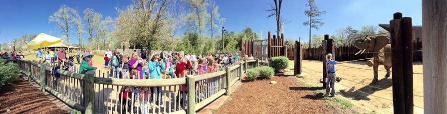 Guests will see the two new African elephants in Trails of Africa. (Birmingham Zoo)